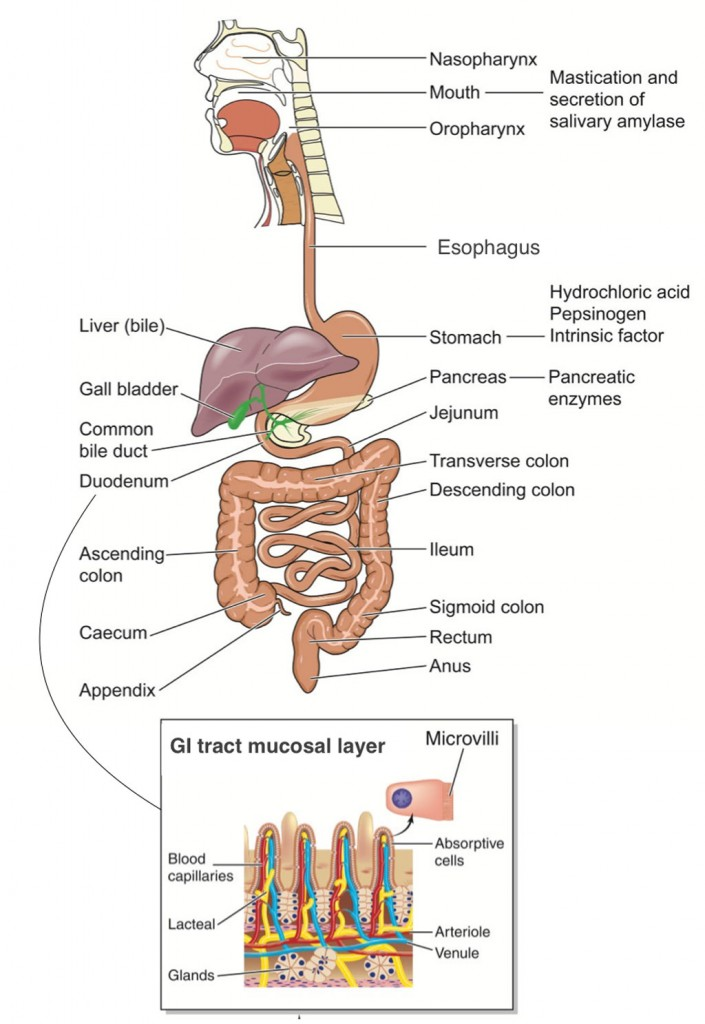Childrens Digestive System Dr Mona Dave Pediatric